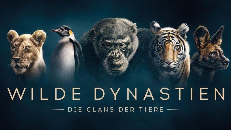 """""""Wilde Dynastien - Die Clans der Tiere"""" - Dokumentation - Kritik"""