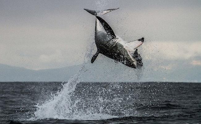 """Unter dem Meer: Kritik zur Doku """"Die Welt der Haie"""""""